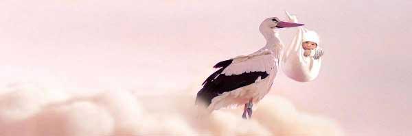 stork-mobile