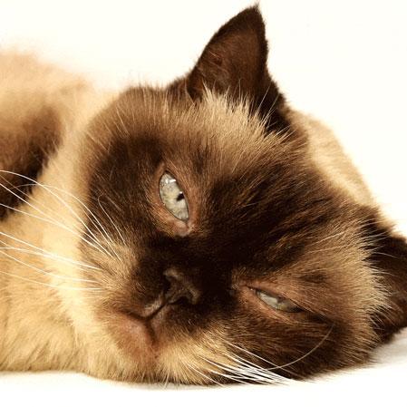 sleepy-cat-smaller